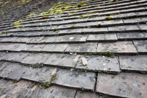 Nettoyage, démoussage toiture